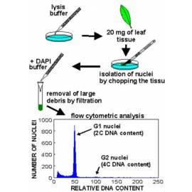 CyFlow® Ploidy Analyser protocol